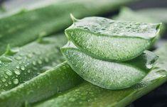 6. Aloe Vera For Hyperpigmentation