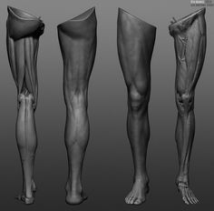 Leg anatomy study., Ren Manuel on ArtStation at https://www.artstation.com/artwork/2LkVK