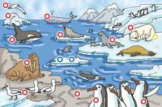 De ijsbeer leeft op de noordpool. Ze leven van vis en zee... by Thysia