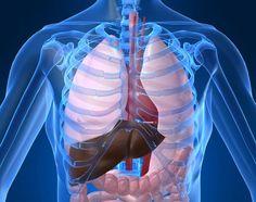 http://fattyliverdisease... Aspartate transaminase serum glutamic oxaloacetic transminase information and facts. Ways to Lower Liver Enzymes