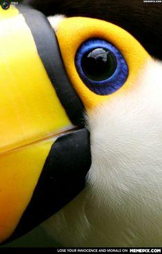 A toco toucan up close......................... creepy