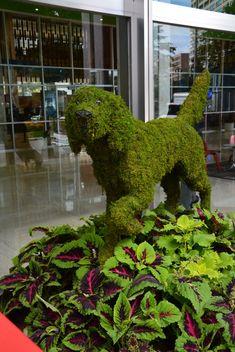 moss-dogs.jpg