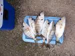 Φτηνό και εύκολο σε εξοπλισμό ψάρεμα είναι το ψάρεμα με απλό καλάμι, δηλαδή φυσικό καλάμι χωρίς μηχανάκι ή άλλο εξοπλισμό. Το ψάρεμα αυτό θε... Nautical, Blog, Navy Marine, Blogging, Nautical Style, Nautical Theme