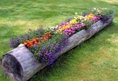 Great idea for an old tree trunk
