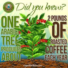 2 pounds of roasted coffee each year.