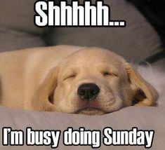 Shh I'm busy doing Sunday quotes quote days of the week sunday sunday quotes happy sunday sunday humor
