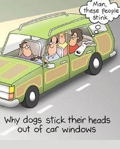 lol cartoon 2 Hilarious Cartoon Joke   ROFL!!