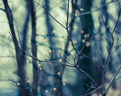 """Woodland Holiday"" by DreamyPhoto"