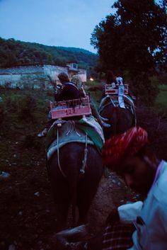 Elephant Parade by Macala Elliott Photography