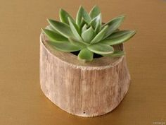 Coole Deko Ideen - 21 selbst gemachte Baumstumpf-Vasen
