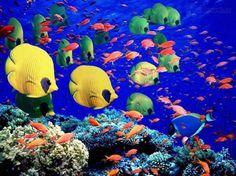 La Gran Barrera de Arrecifes llena de vida, Australia.                                        Los paisajes más coloridos del planeta   Naturaleza - Todo-Mail