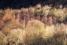 Trees - the crop Ah that's better. Something wasn't quite right. There will be another variation of this picture shortly but this is good for now. This is winter trees in the English Lake District my style. #canon6d #canon #canonphotographer #canonphotography #canonphotos #rickmcevoyphotography #rickmcevoy #architecturalphotography #architecturalphotographer #architecturephotography #architecturephotographer  #constructionphotographer #dorsetphotographer #hampshirephotographer…