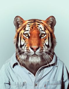 """Washer front, with shoulders cut a bit; Blik decal, 27""""x26"""", $30. Zoo Portraits: Tiger"""