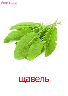 Montessori Materials, Teaching Materials, Russian Language, Otters, Fruits And Vegetables, Special Education, Beautiful Birds, Food Photography, Plant Leaves