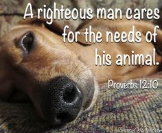 God Loves You. likes · 1 talking about this. God Loves You, A place for Inspiration, sharing and Prayers Click like or Share to help spread Gods. Animal Quotes, Dog Quotes, Bible Quotes, Dog Poems, Adult Quotes, Lovers Quotes, Prayer Quotes, Quotable Quotes, Pregnant Horse