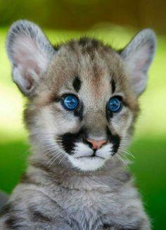pretty big blue eyes