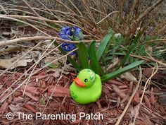 The Duck and the Purple Flower: The Rubber Ducky Project Week 26 | Parenting Patch