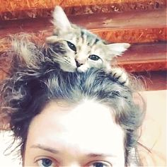 """From Kat Denning's Instagram: """"The Hottest Hair Accessory for 2014"""" - I guess I'm not the only one who's cat loves to do this."""