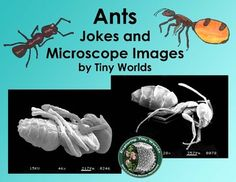 This Booklet contains 7 images from a Scanning Electron Microscope, and 4 jokes about ants to inspire your students to learn more. It will serve as a supplement to your lessons about ants. The pages can be printed on card stock and used as a booklet for
