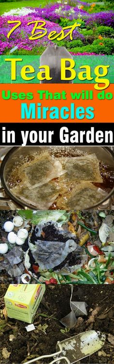 Before you toss another tea bag, must check out this post! Tea bags are not just for brewing tea, there are so many TEA BAG USES in the garden that can be useful.  #gardeningideas