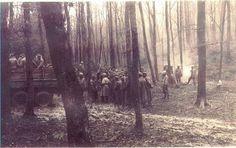 "22nd Infantry near Grasshau, Germany; Hurtgen Forrest.. ""Letters To Wilma"""