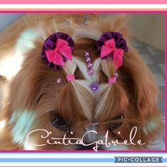 Hairstyle Dog - Model Shihtzu Cacau