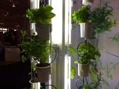Nutritower is a vertical farm for your tiny condo