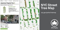 Explore and learn about every street tree in New York City, and record and share all your stewardship activities.