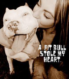 #pitbulls #dogs loveeee my pitbull ;)