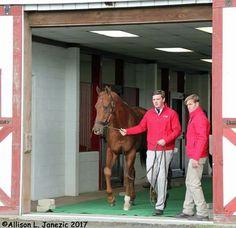 From Allison Janezic Dortmund Bonita Farm with Kaleem Shah who came to visit his boy. Dortmund at Bonita Farm stallion show Horses, Boys, Animals, Dortmund, Baby Boys, Animales, Animaux, Animal, Senior Boys