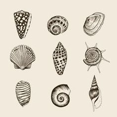 small shell tattoos - Google Search