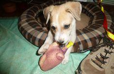Puppy Chew Toys, Dog Garden, Dog School, Dog Teeth, Medium Dogs, Adolescence, Dog Owners, Rescue Dogs, Animales
