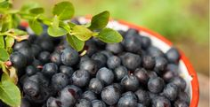 biokia - Google Search Fruits Drawing, Blueberry, Google Search, Food, Berry, Essen, Meals, Yemek, Blueberries