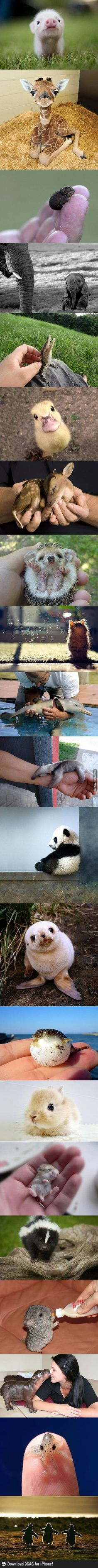 Baby animals.  Couldn't help myself :D