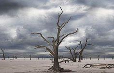 ¿Estamos ad portas de un gran cataclismo en la Tierra? Científico hace dura advertencia | Ciencia