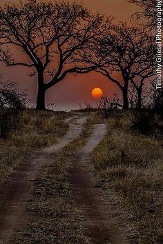 Spooky Night . . . I think it's enchanting.
