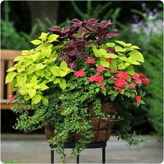 Coleus are so pretty. The Lime color makes the othe plants show up beautifully. I always have coleus in my flower beds or in pots. Outdoor Plants, Outdoor Gardens, Patio Plants, Front Porch Plants, Front Porches, House Plants, Outdoor Decor, Beautiful Gardens, Beautiful Flowers