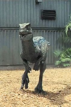 Raptor Blue Jurassic World Indominous rex tumblr