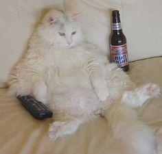 ネコ祭り特設会場(期間限定) デブ猫画像