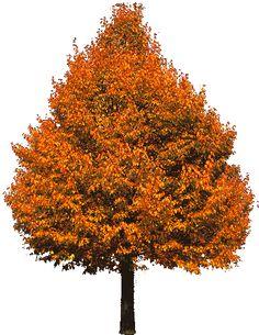 Ash-falltree06pa+c%C3%B3pia.png (395×512)
