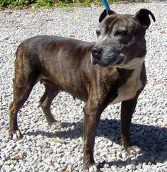Please meet DeeDee, just arrived in at the stray kennels and will need help in 7 days if not claimed