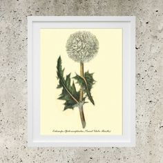 Globe Thistle  SALE Digital Download   Botanic by DigitalBanana