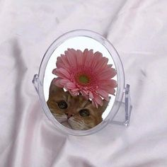 Most up-to-date Cost-Free cats and kittens aesthetic Concepts After you carry the latest pussy-cat in your own home, it becomes an exhilarating time, and also for quite a Silly Cats, Funny Cats, Kittens Cutest, Cats And Kittens, Cat Whisperer, F2 Savannah Cat, Cat Aesthetic, Beautiful Cats, Cat Memes