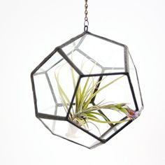 Perfect for air plants!