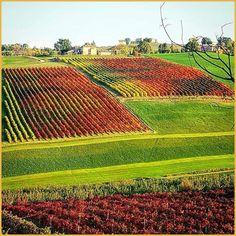 •Colori d'Ottobre• La #PicOfTheDay #turismoer di oggi si immerge nei colori autunnali di Castelvetro di #Modena. Congratulazioni e grazie a @staisereno70 via @modenaedintorni / •October colors•  Today's PicOfTheDay turismoer plunges into autumnal colors of #Castelvetro's fields, Modena. Congrats and thanks to staisereno70.