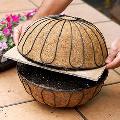 Container Gardening 101027000 - Create the perfect container garden with added height with these hanging basket planting tips. Hanging baskets look great on shepherd's hooks out in the middle of a garden, or hanging from a patio or balcony. Hanging Flower Baskets, Hanging Succulents, Succulents Garden, Garden Pots, Planting Flowers, Flower Gardening, Diy Hanging, Hanging Vegetable Basket, Hanging Basket Garden