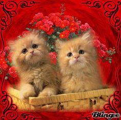 Pretty Cats, Beautiful Cats, Animals Beautiful, Kitten Cartoon, Kitten Gif, Kitten Love, I Love Cats, Cute Little Animals, Cute Funny Animals