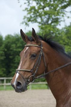 Camille, Horses, Beautiful, Jumping Horses, Horses For Sale, Show Jumping, Future, I Want You, Horse