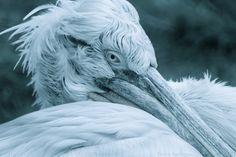 Uvolnil se termín na medicínskou masáž 11. června od 18.30 hod v Alchymii Bílého Pelikána. V případě zájmu pište na monika.michaelova@gmail.com Owl, Bird, Animals, Animales, Animaux, Owls, Birds, Animal, Animais