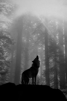 """How lonely is the night without the howl of a wolf"" -Unknown"